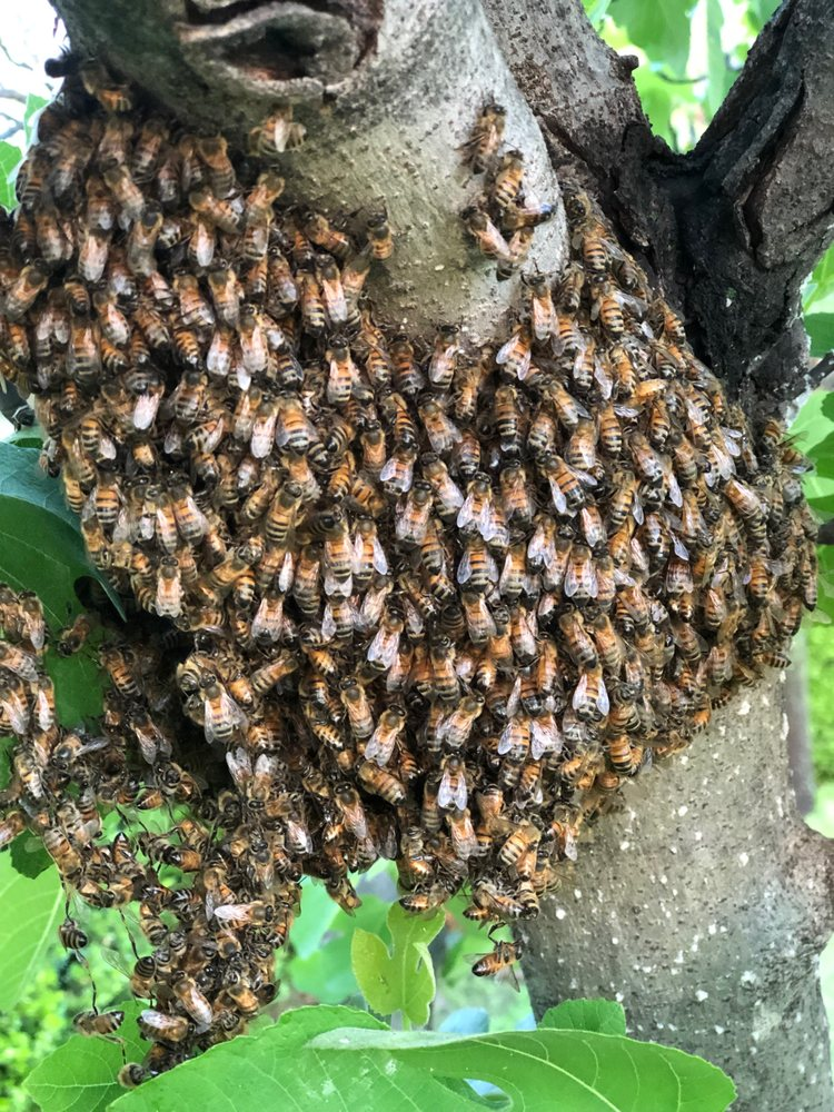 Photo of Bee Safe Bee Removal: Dallas, TX