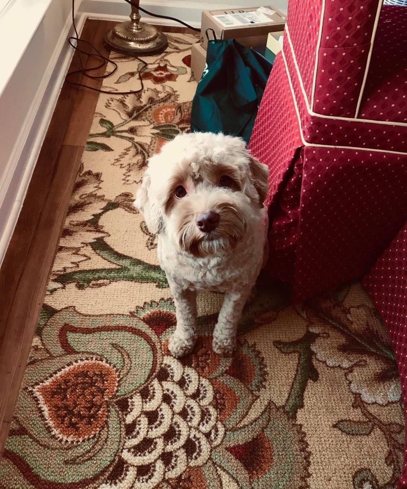 PAWS Pet Concierge Services