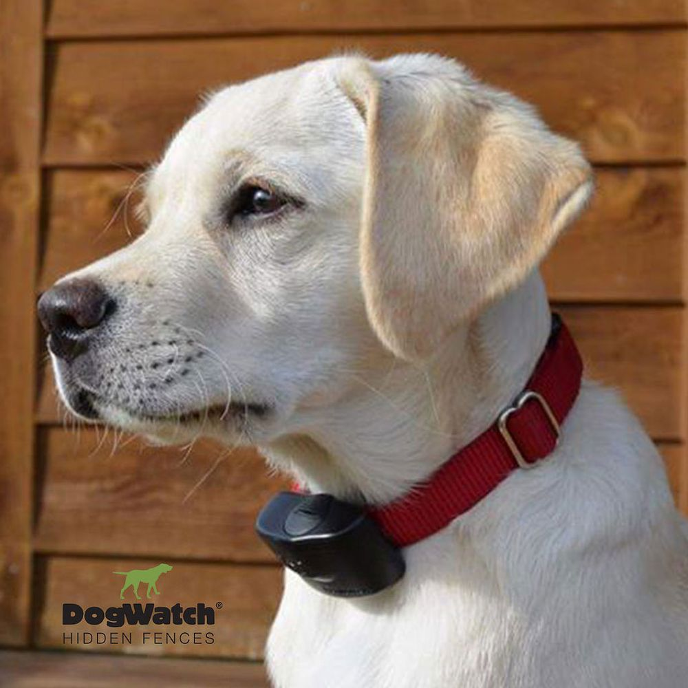 DogWatch Systems