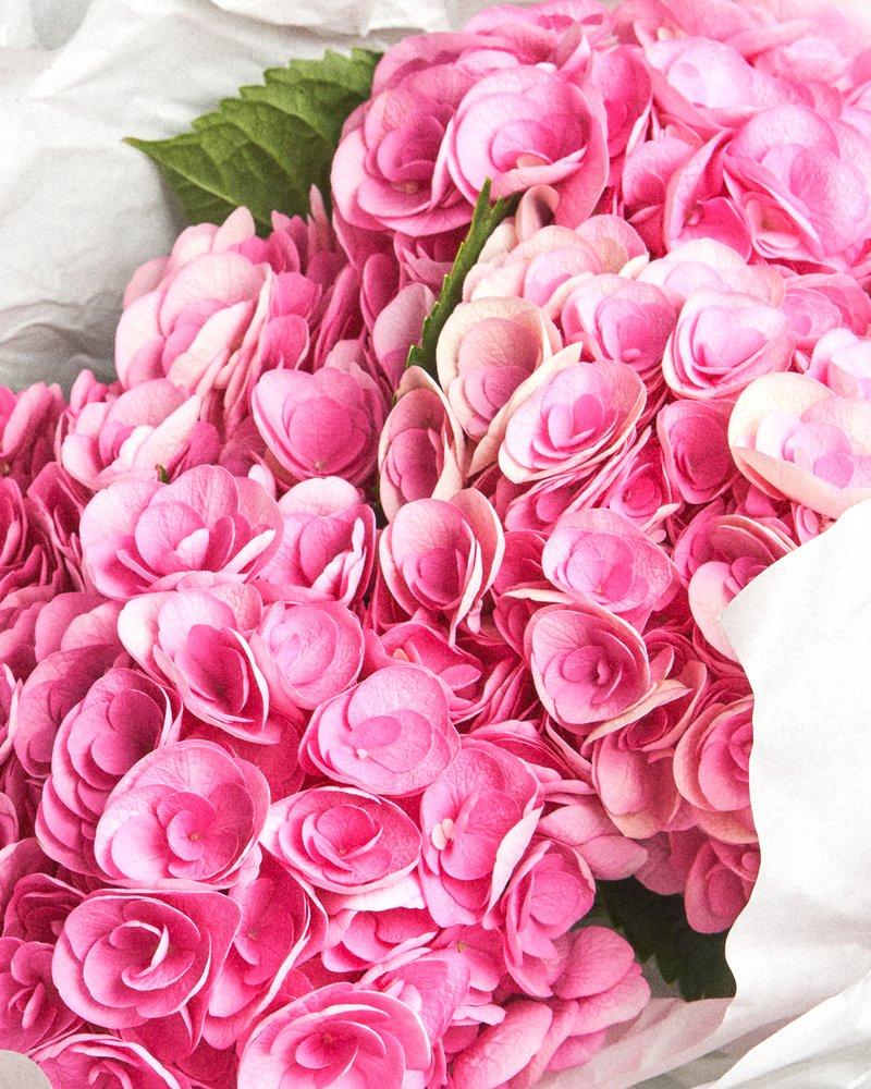 FMI Farms Flower Wholesale