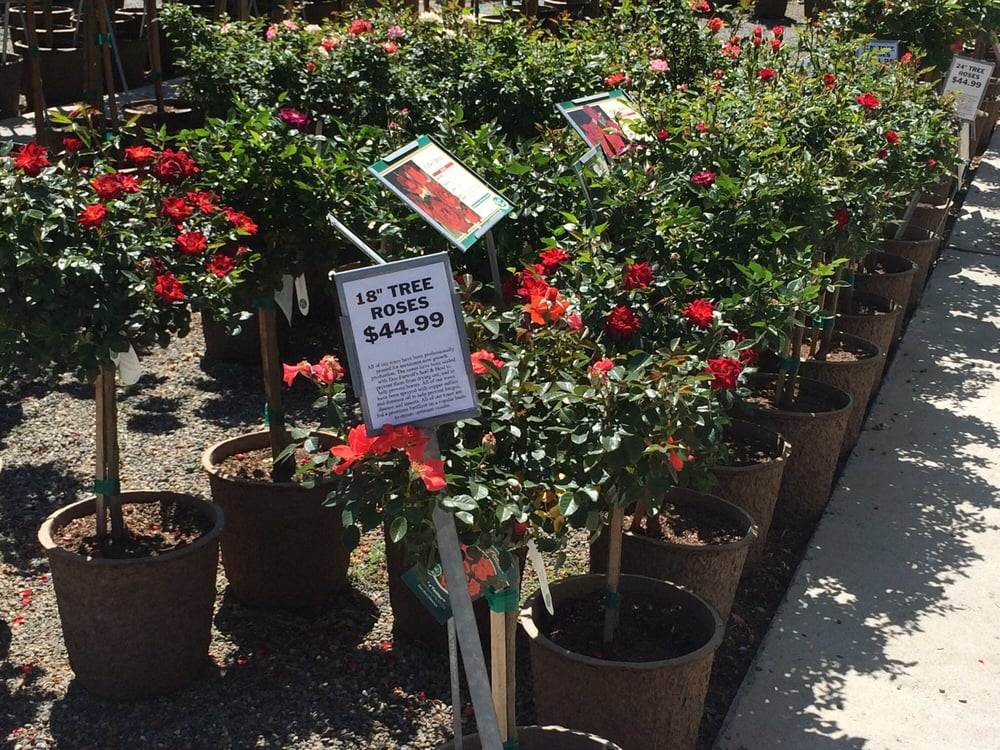 Photo Of Almaden Valley Nursery San Jose Ca United States