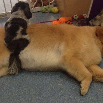 Alpha Dog Groom Shop