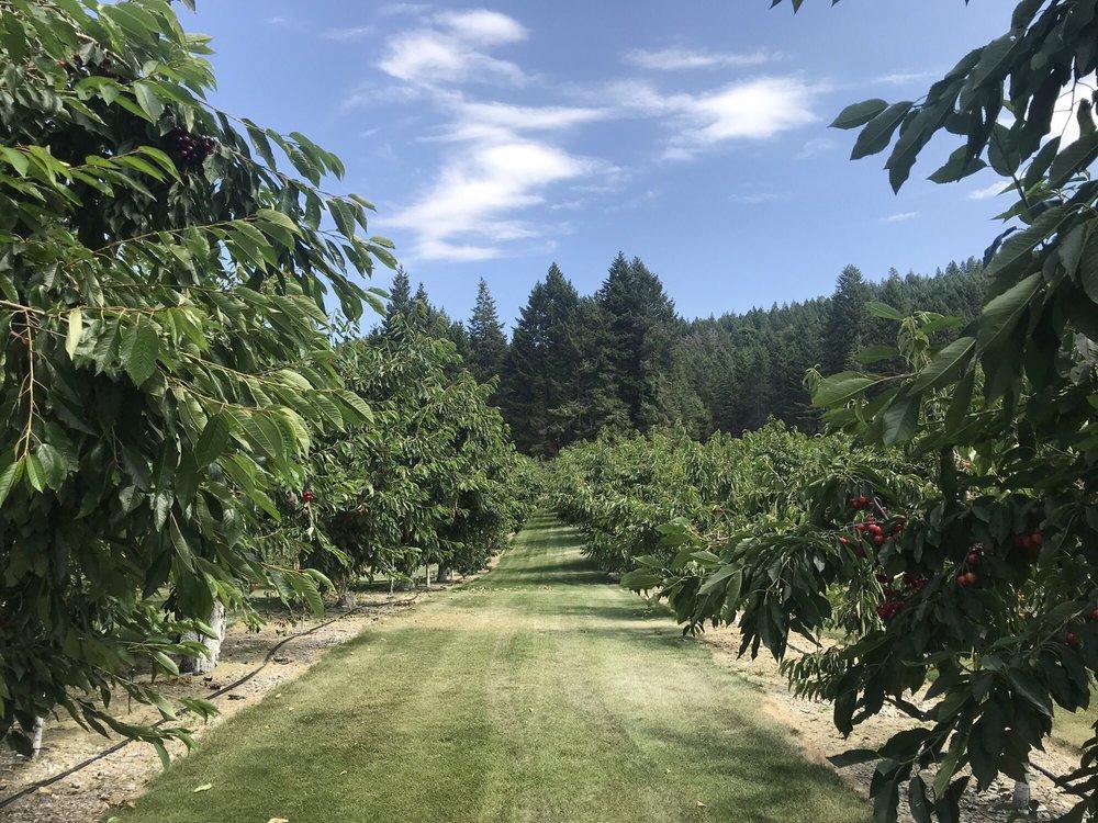 Bury's Orchard: 14606 Shore Acres Dr, Bigfork, MT