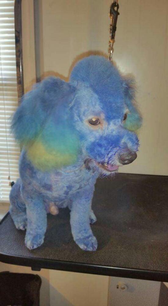 Jenn's Furry Friends Pet Grooming: Saint Louis, MO