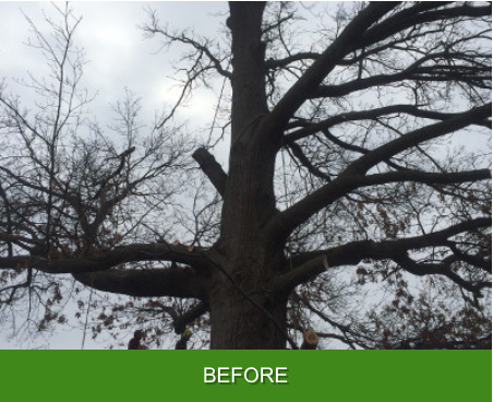 Cross Timbers Arborist