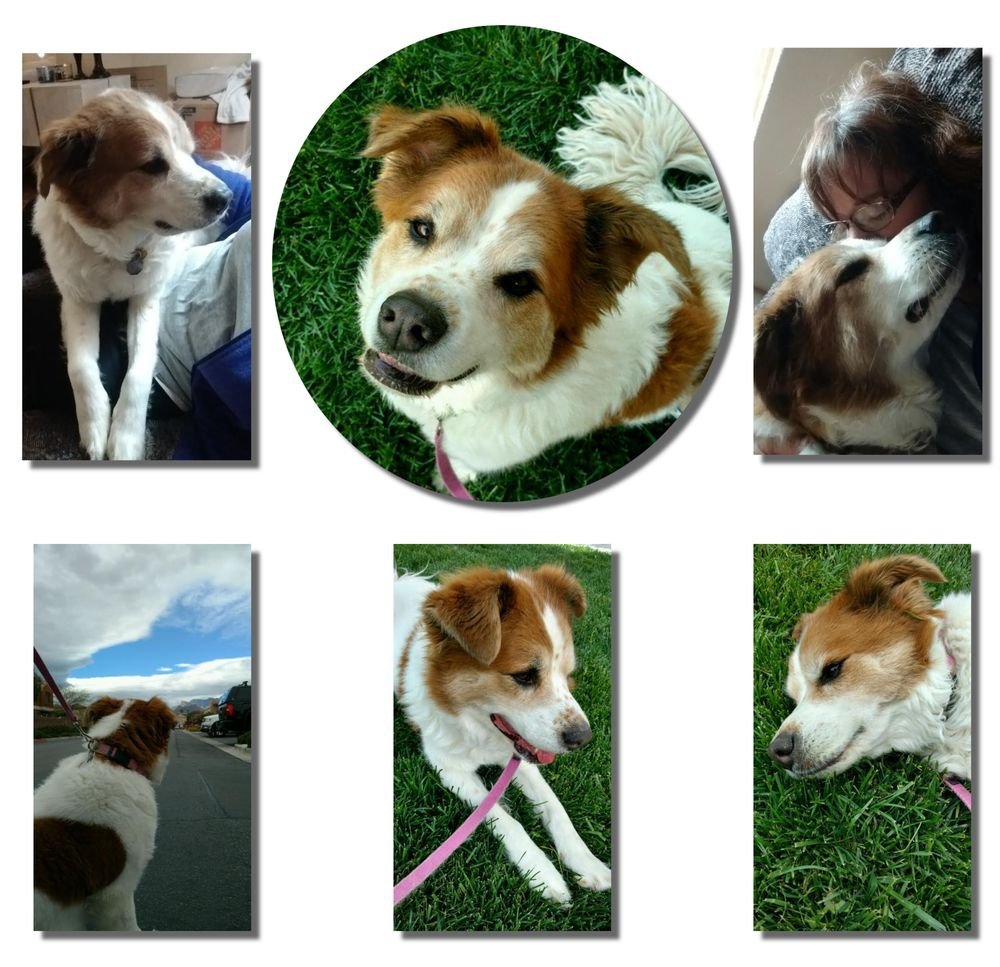 A Purrfurred Pet Care Service