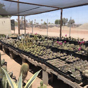 Arizona Cactus Sales - 65 Photos & 37 Reviews - Nurseries