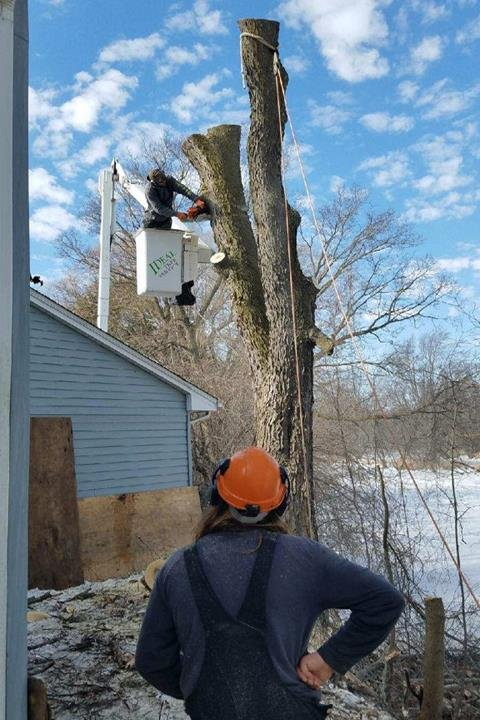 Ideal Tree Service: 3040 Hwy 33, Saukville, WI