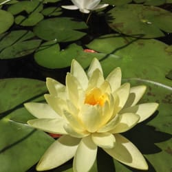 Photo Of Albuquerque Garden Center   Albuquerque, NM, United States. Lotus  On The