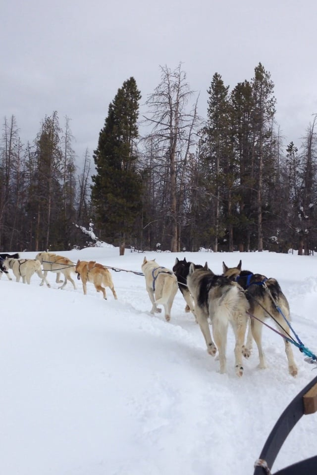 dog sled rides of winter park - 640×960