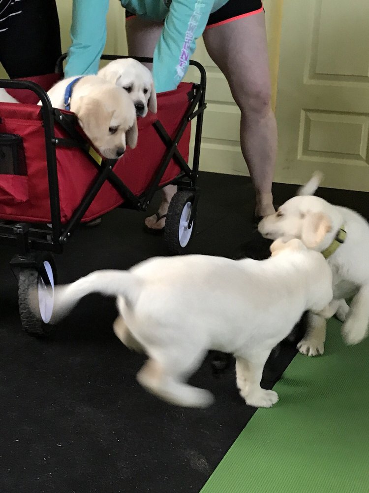 Social Spots from PuppYoga