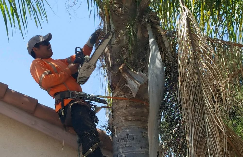 Bernabe Tree Service