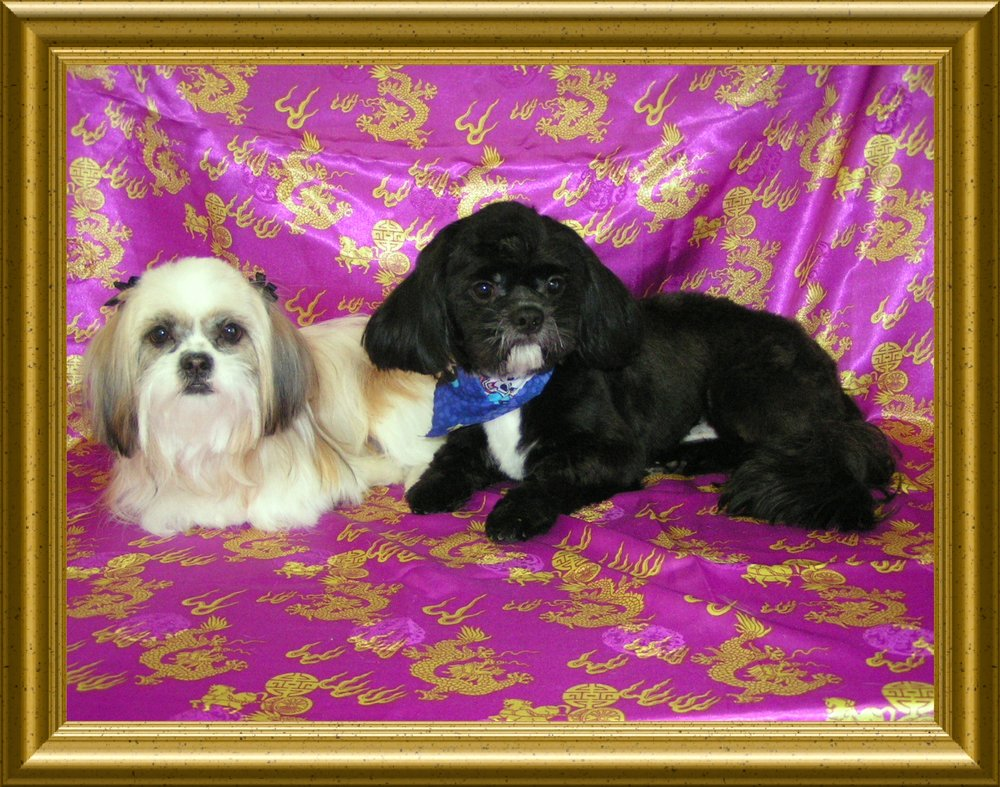 Photo of Grooming Tails Pet Boutique: Hurlock, MD