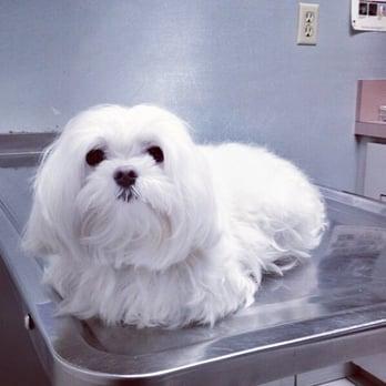 Hour Animal Hospital Miami Beach