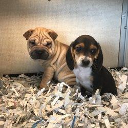 Puppies Plus - 74 Photos & 97 Reviews - Pet Stores - 6405 S
