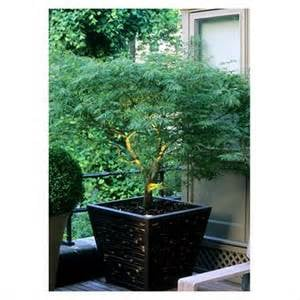 New York Plantings Garden Design: 2672 21st St, Brooklyn, NY