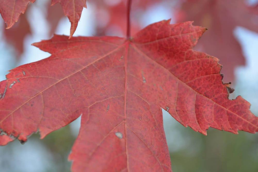 Arbor Vantage: 7930 Oak Rd, Arpin, WI