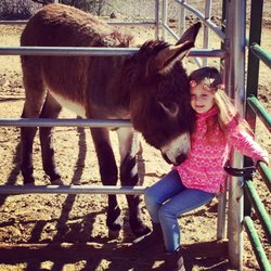 19 Awesome Helping Hearts Equine Rescue
