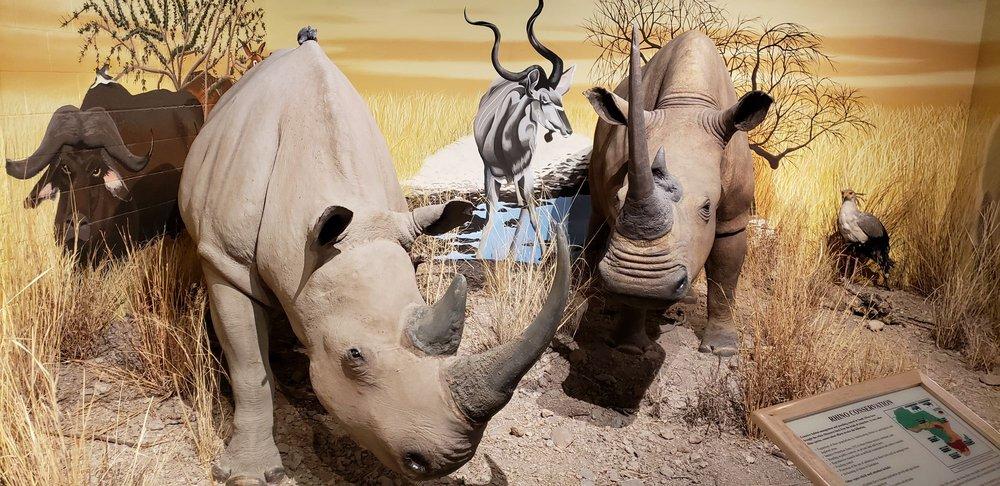 International Wildlife Museum: 4800 W Gates Pass Rd, Tucson, AZ