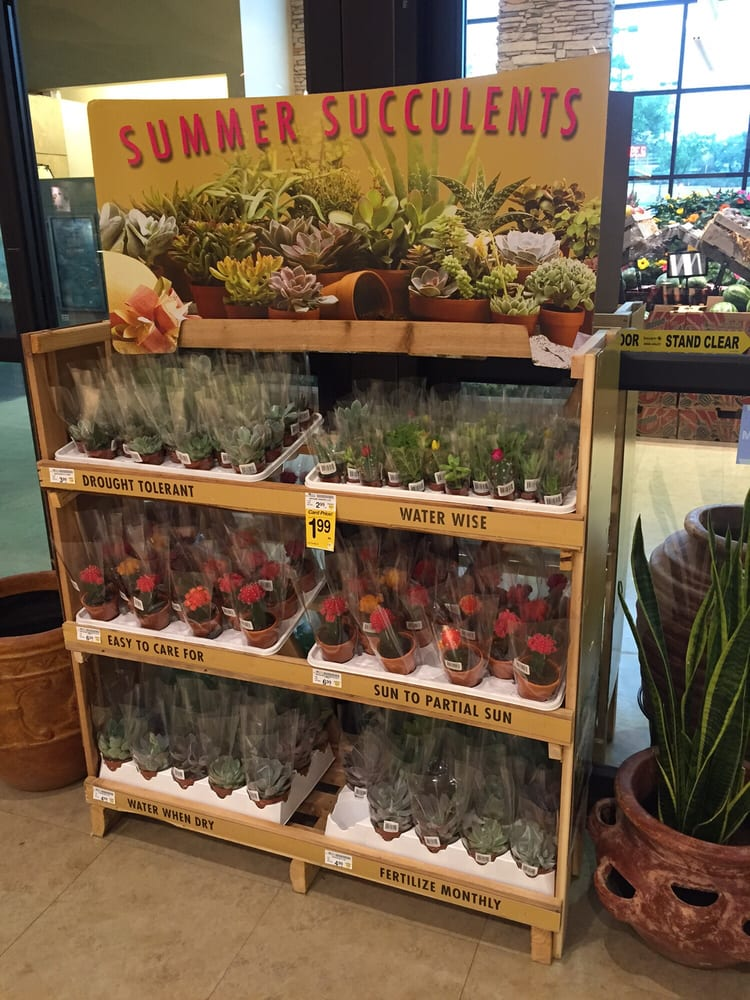 Photo of Randalls - Lakeway, TX, United States. Cute little inexpensive  plants for