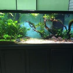 the planted aquarium store closed 45 photos 22 reviews pet