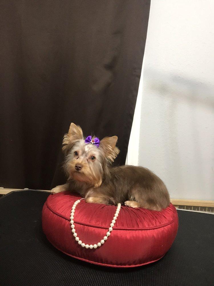 Bloomingtails Doggie Salon: 720 S 13th St, Nederland, TX