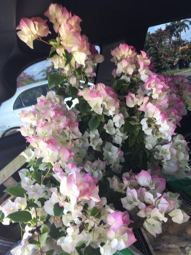 Floral Acres: 12440 S State Rd 7, Boynton Beach, FL