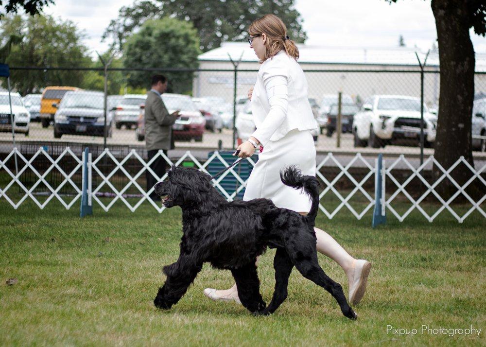 Tailored Dog Training