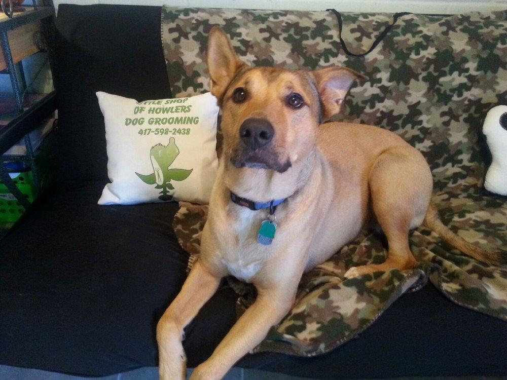 Kirbyville Veterinary Clinic: 4525 E Hwy 76, Kirbyville, MO