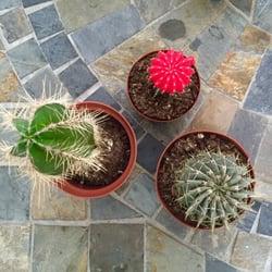 Photo Of Houston Garden Center   Houston, TX, United States. Variety Of  Cacti
