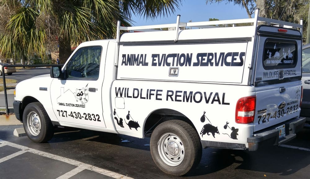 Animal Eviction Services - 11 Photos - Pest Control - 739