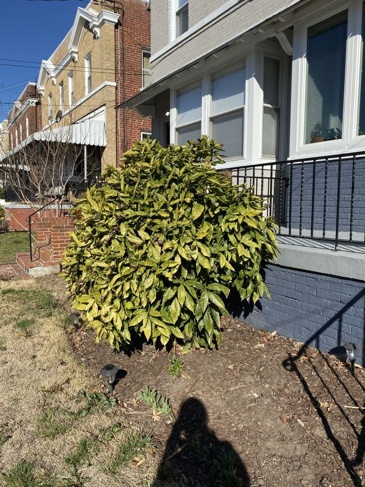Louis Lawn and Landscaping: Silver Spring, MD