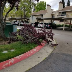 a9d63180d Photo of Somersett Hills - Roseville, CA, United States. Grounds upkeep is  bad