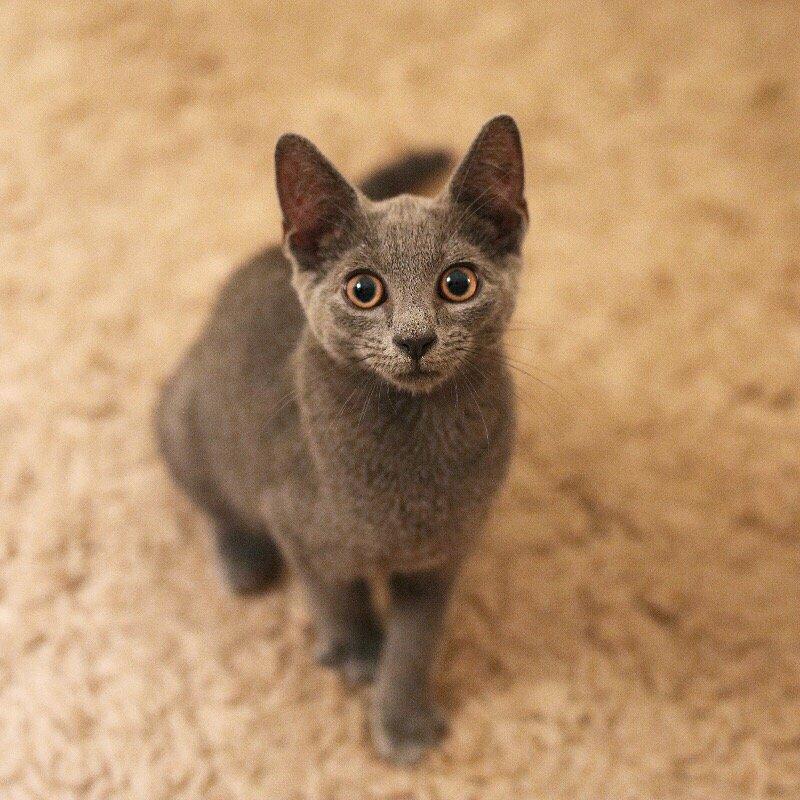 how long do manx cats live