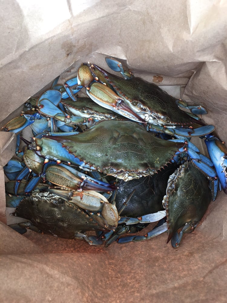 Live blue crabs today yelp for Pops fish market