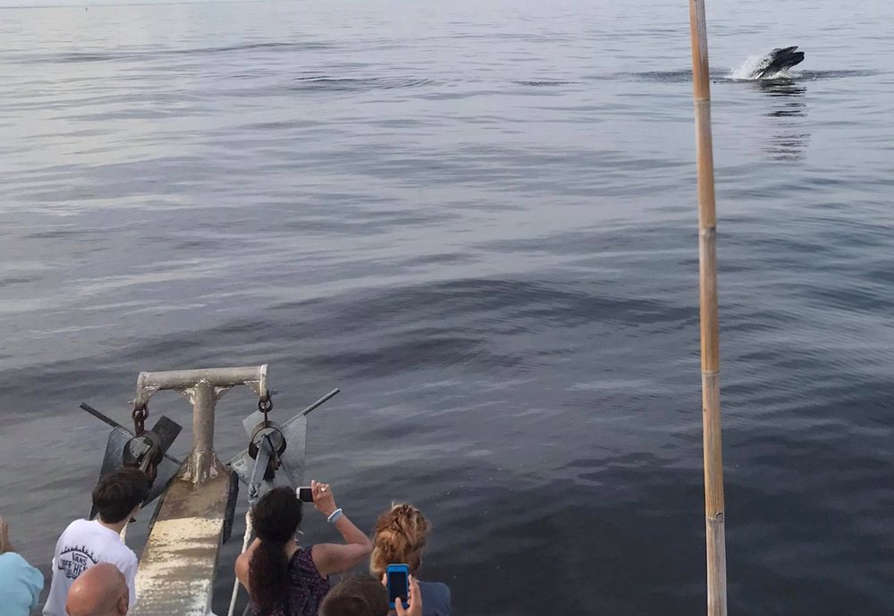 Bill McKim's Jersey Shore Whale Watch Tour: Belmar, NJ