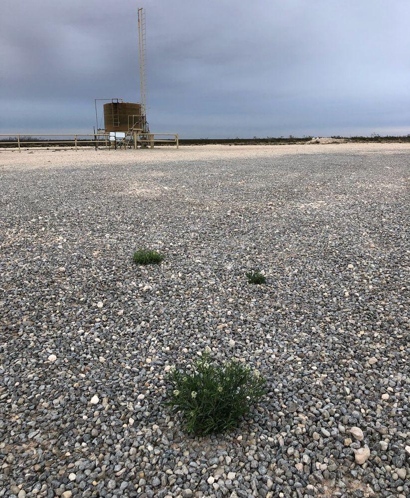 Horizon Pest Control: 4404 Mescalero St, Carlsbad, NM