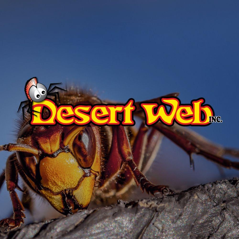 Desert Web: Yuma, AZ