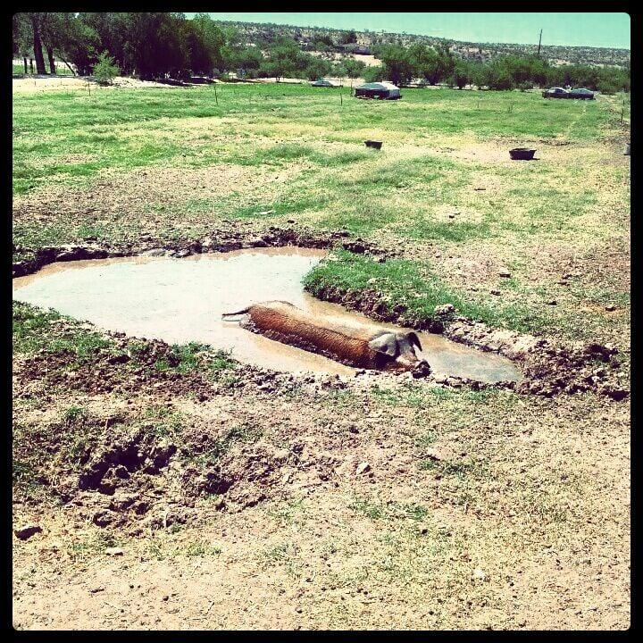 Walking J Farm: 10461 Arivaca Rd, Amado, AZ