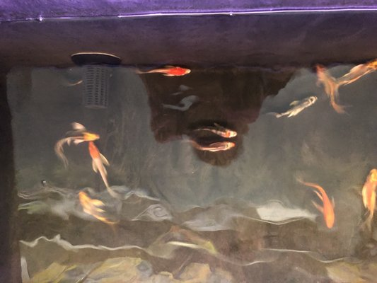 Hung Ming Aquarium 2501 Geneva Ave Daly City, CA Seafood