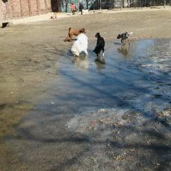 Tudor Street Dog Park