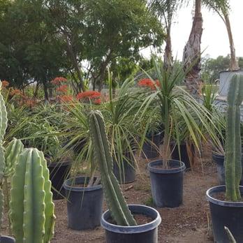 Photo Of Sterling Gardens Nursery Moorpark Ca United States
