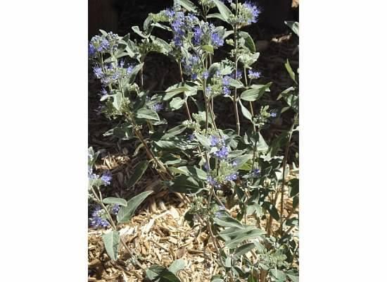 Loess Hills Lavender Farm: 2278 Loess Hills Trl, Missouri Valley, IA