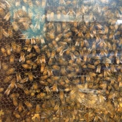 Photo Of Ashcombe Farm Greenhouses Mechanicsburg Pa United States Fresh Honey