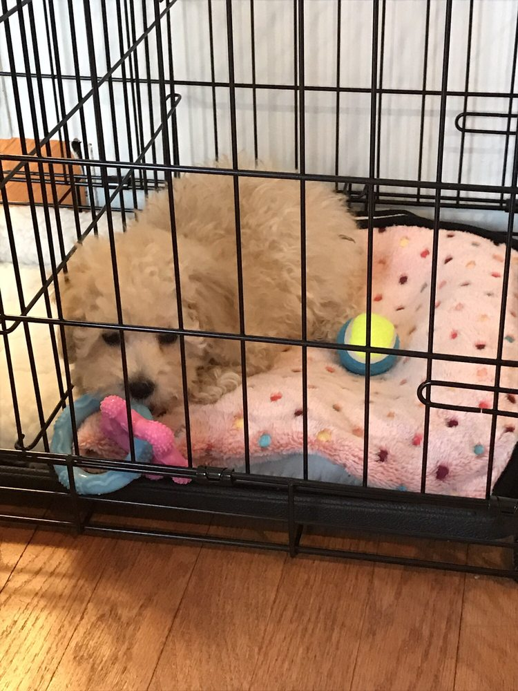 Puppy palace florida - باث أند بودي