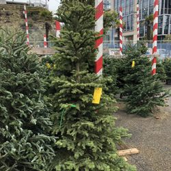 Delancey Street Christmas Trees.Delancey Street Holiday Trees Holiday Decorations 2020