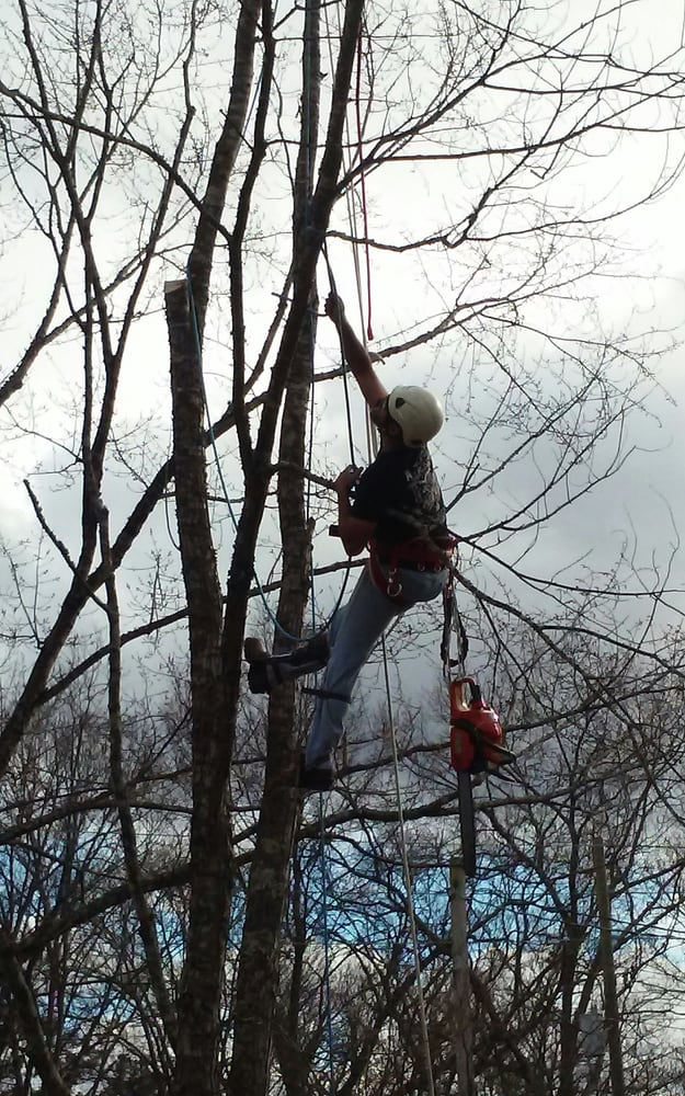 McDaniel Tree Services