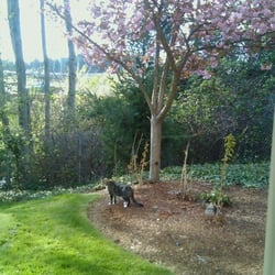 Photo of Fircrest Garden Apts - Tacoma WA United States. View from my & Fircrest Garden Apts - Get Quote - Apartments - 4215 S 30th St ... Pezcame.Com