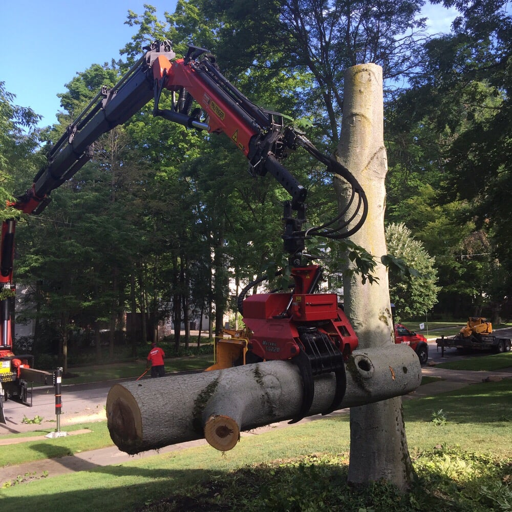 Montgomery Tree & Stump Removal: 11727 Kile Rd, Chardon, OH