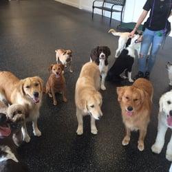 Unleashed Dog Training Mn